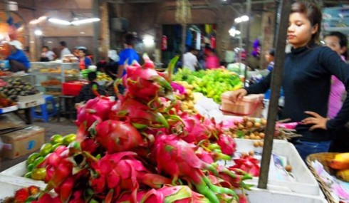 Bright pink dragon fruit in the market