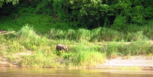 Color photo of the elephant I spotted