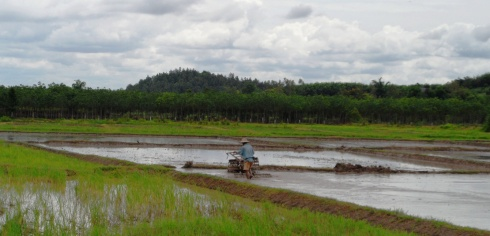 Color photo of rice paddy and farmer in Thailand