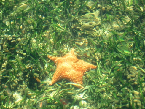 Starfish in Coral and Sea Grass
