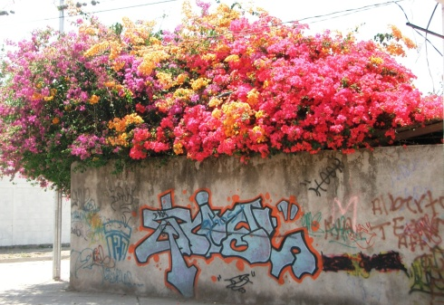 Corner in bloom with graffiti