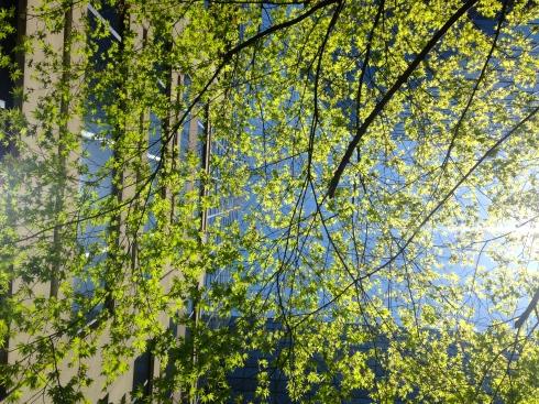 Spring Serenity in a Concrete Jungle